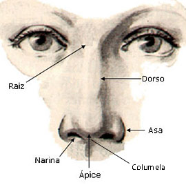 Cirurgia plastica no nariz - anatomia